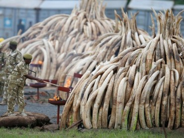 Top customs officer among seven arrested over ivory smuggling syndicate