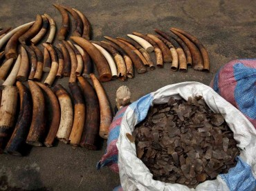West Africa's wildlife is the new Cocaine